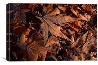 Maples leaves covered in Winter frost, Canvas Print