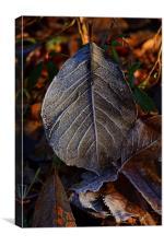 Frozen leaf in deep mid winter, Canvas Print