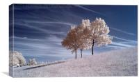 Infrared Splendour., Canvas Print