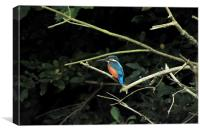 Kingfisher watching out for dinner, Canvas Print