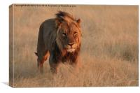 Golden light on a prince, Canvas Print