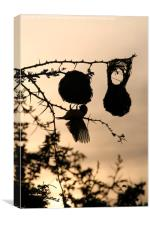 Weaver silhouette , Canvas Print