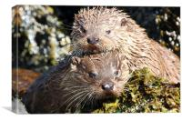 The Otter siblings, Canvas Print
