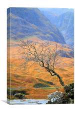 The Glencoe lone tree, Canvas Print