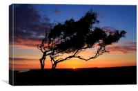 The Lone tree sunset, Canvas Print