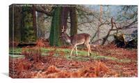 Deer among the ferns, Canvas Print