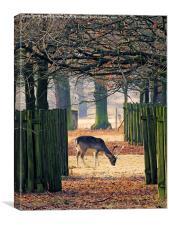 Grazing deer, Canvas Print