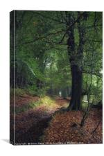The Old Wood , Canvas Print