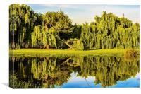 Willow reflections, Canvas Print