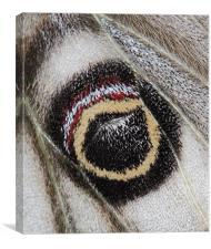The eye of an Emperor, Canvas Print