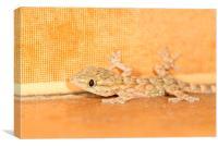 Moorish Gecko portrait, Canvas Print
