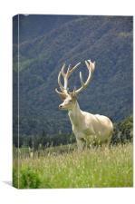 white stag in velvet, Canvas Print