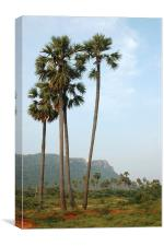 Palmyra palms, Canvas Print