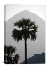 Palmyra trees, Canvas Print