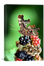 Butterfly attarcted to Summer Fruits, Canvas Print
