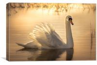 Swan Sunrise, Canvas Print