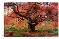 The beauty of trees, Canvas Print