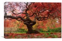 Acer magic, Canvas Print
