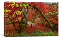 A spectrum of color, Canvas Print