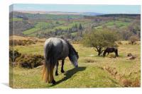 Dartmoor , Canvas Print