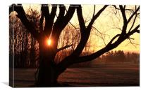 Frosty Sunrise, Canvas Print