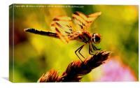 Dragon fly 2, Canvas Print