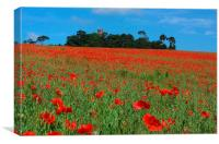 POPPIES AT FARINGDON FOLLY, Canvas Print