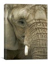 Mournful Elephant , Canvas Print