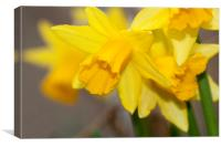 The Daffodls, Canvas Print