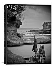 Driftwood New Zealand, Canvas Print
