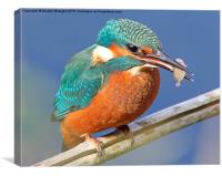 Kingfisher's fish supper, Canvas Print