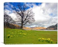 Ullswater Daffodils, Canvas Print