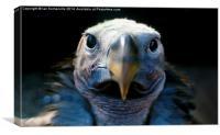 The Beak, Canvas Print