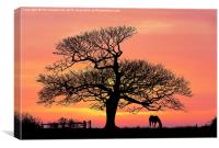 silhouette at sunset, Canvas Print