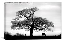 silhouette of tree and horse , Canvas Print
