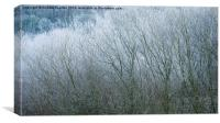 Frosted Willow abstract, Canvas Print