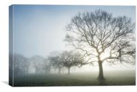 Glowing Oak on an ethereal morning, Canvas Print