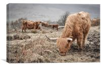 Highland cattle in the Peak District, Canvas Print