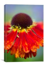Vivid summer colour in an English garden, Canvas Print