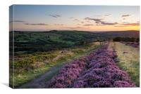 Purple Heather on a summer evening, Canvas Print