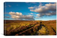 Heather blooming on moors above Hayfield, Canvas Print