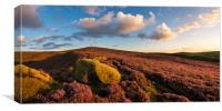 Heather moorland at sunset, Canvas Print