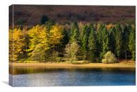 Forest beside Derwent reservoir, Canvas Print
