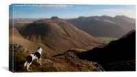 Border Collie Dog Overlooking Wasdale, Canvas Print