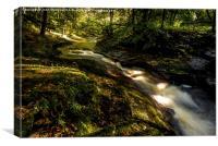 Stream Passage Through Woodland, Canvas Print