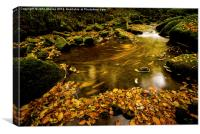 Flowing Autumn Leaves , Canvas Print