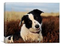 I'm a nice dog!, Canvas Print