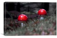 Fly Agaric Twosome, Canvas Print