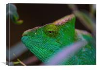 chameleon , Canvas Print