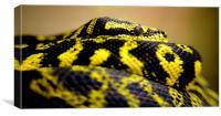 carpondro python, Canvas Print